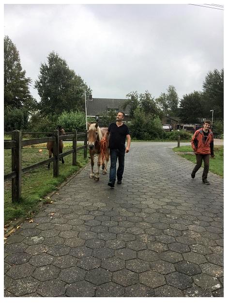 Met paard over straat