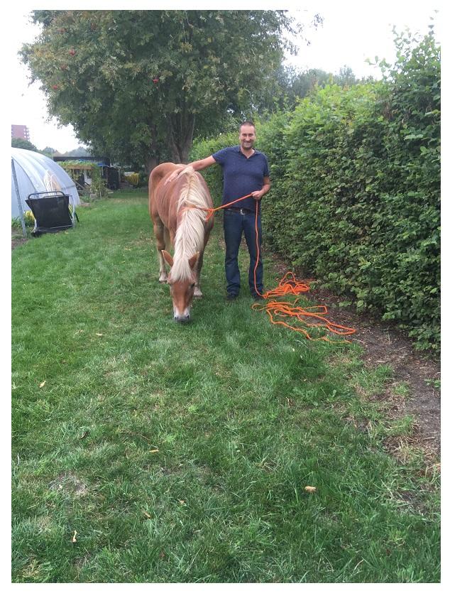 Ramon met paard in groenstrook