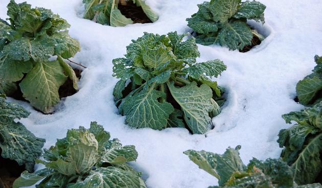 groenten-in-de-wintertuin